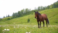 Countryside, green, horses Stock Footage