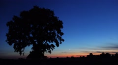 Ambient twilight landscape horizon with silhouette of Oak Trees Stock Footage