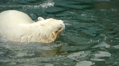 Polar bear playing in water Stock Footage
