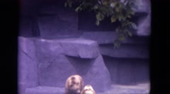 1972: two little brown bears standing in the zoo CHICAGO, ILLINOIS Stock Footage