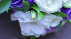 A close up macro shot of a blue colored eustoma Stock Footage