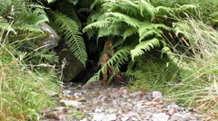 Brook on the mountain slope Stock Footage