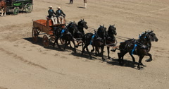 Gentile Giant Draft horse and wagons DCI 4K Stock Footage