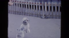 1961: a woman outdoor playing with a poodle on a leash MICHIGAN Stock Footage