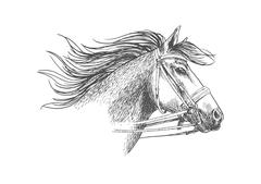 Sketch of horse head in a bridle Stock Illustration