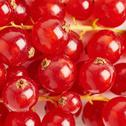 Red Currant as texture background top view Stock Photos