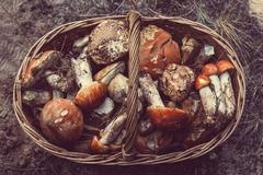 Mushrooms in Fall season Stock Photos