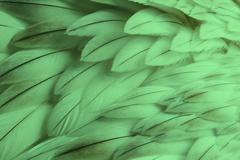 Green fluffy feather closeup Stock Photos