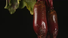 Human hand lifts a beet from a water (black background) Stock Footage