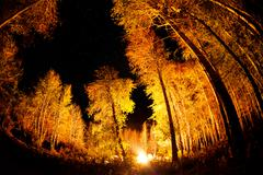 Forest with bonfire at night starry sky Stock Photos