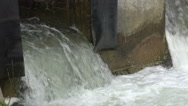 Salmon run in Ontario, Canada Stock Footage