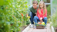 Family gathering crop of cucumbers, pepers and tomatoes in greenhouse Stock Footage