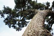 Tree and sky Stock Photos