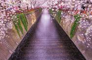 Cherry blossoms at Meguro river, Tokyo, Japan Stock Photos