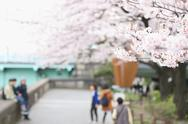 Cherry blossoms Stock Photos