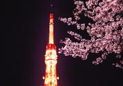 Cherry blossoms and Tokyo tower Stock Photos