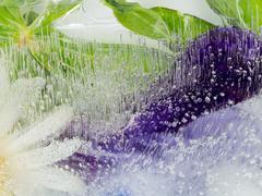 Fragile organic purple green abstraction Stock Photos