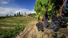 Vineyard landscape in autumn, Tuscany, Italy Stock Footage