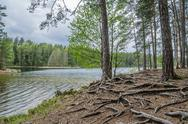 Bare root trees near the forest lake Stock Photos
