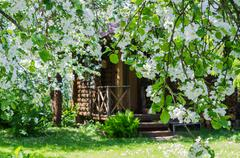 Garden with blossoming apple-trees Stock Photos