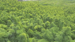 Bamboo forest Maui (Hawaii) | Aerial shot | Drone shot Stock Footage