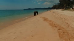 Aerial view. Elephant on Bang Tao Beach. Phuket Island. Thailand Stock Footage