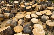Wooden logs of oak tree Stock Photos