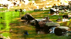 Beautiful mountain stream with butterflies. Stock Footage