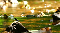 Beautiful butterfly on a mounting stream. Stock Footage