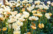 Spring flowers closeup. Stock Photos