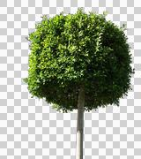 Blowing on the wind tree isolated with alpha Stock Photos