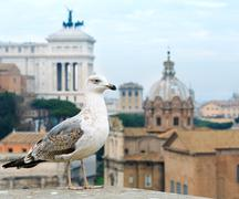 View from Palatine Hill. Stock Photos