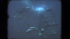 1962: sea life swims around under the deep, dark, blue sea. SAN PEDRO Stock Footage