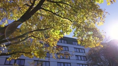 Sun shinning in an Autumn Morning Stock Footage