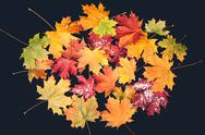 Autumn leaf on black background Stock Photos