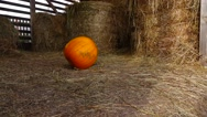 Large pumpkin slowly roll at hayloft, turn and stop in middle, slow motion Stock Footage