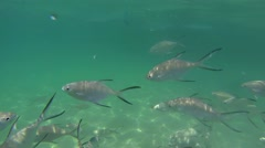Feeding of Tropical Ocean Fish in the Wild Stock Footage