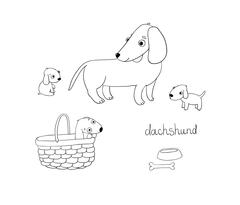 Set of cute dachshund illustration in different poses Stock Illustration