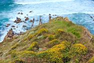 Blossoming ocean shore. Stock Photos