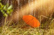Umbrella in the autumn forest Stock Photos