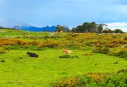 Cow herd on summer hill. Stock Photos