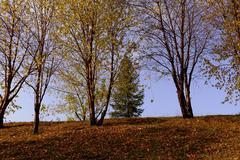 City park Leaf fall in the autumn Stock Photos