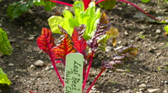 Green and red plants on the garden in the yard in Ireland Stock Footage