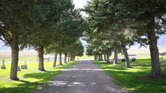 Tree lined cemetery road HD  Stock Footage