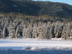 Forest snow and frozen lake Stock Photos
