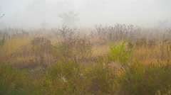 Field in the fog. Early morning Stock Footage