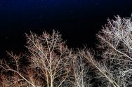 White trees on the night sky Stock Photos