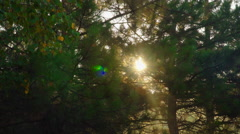 Optical glare which makes the morning sun Stock Footage