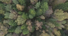 Aerial view of northern park. Pavlovsk, Russian Federation Stock Footage