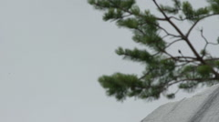 Pine branches and marble Stock Footage